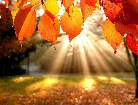 fall_leaves_03