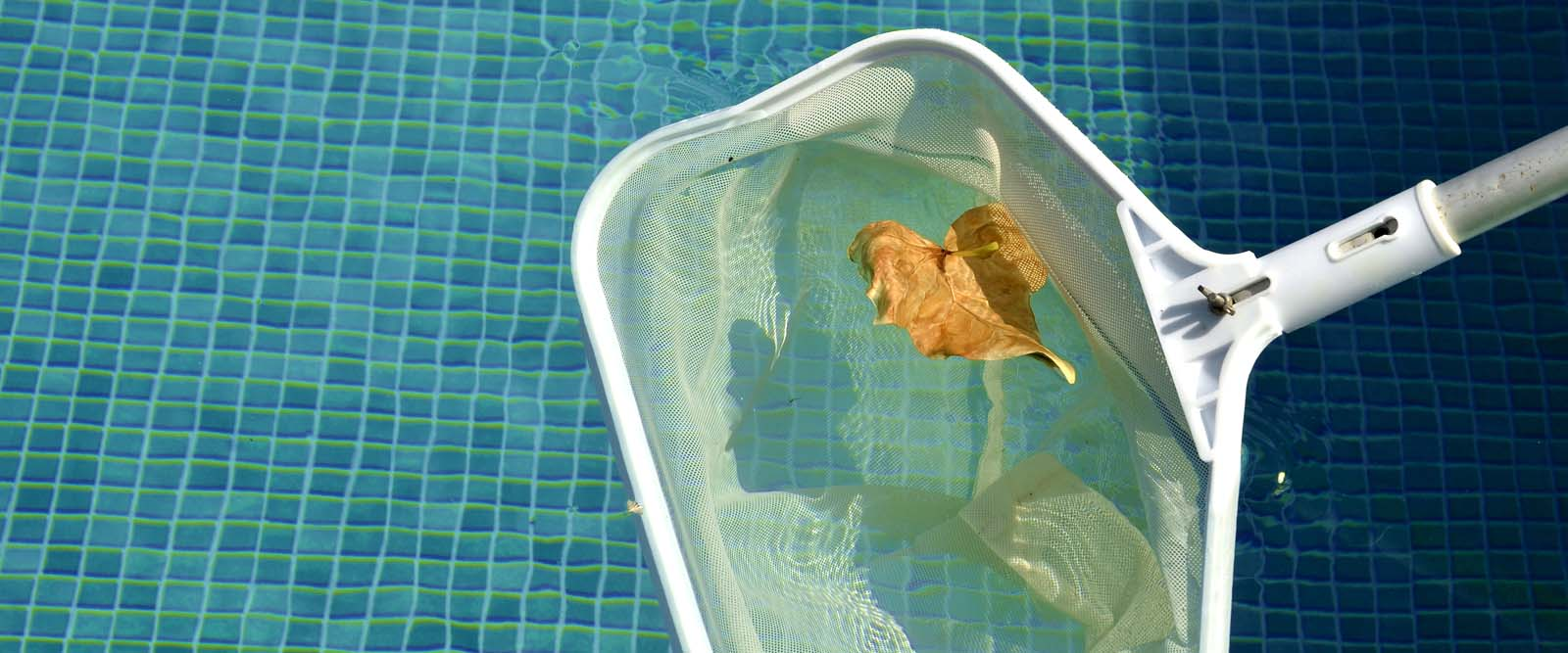 leaf-in-pool-1600